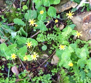 A mystery flower - yellow daisy-like flowers are the hardest to identify