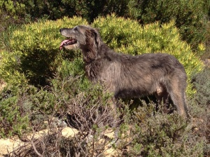 Seamus enjoying the wind