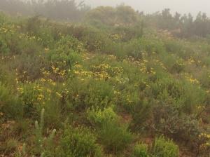 The lands full of flowers, primarily Senecio