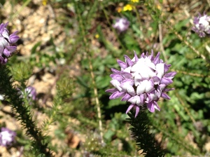 Blue unidentified flower