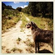 Seamus - king of the mountain