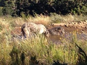 Seamus and Maebh enjoying the water at Fox Pan