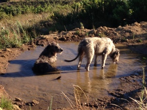 Seamus and Maebh enjoying water and wind