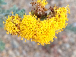 Clustered yellow flowers