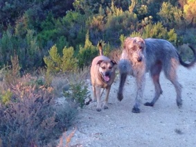 Jemima Chew and Maebh enjoying the evening hunt