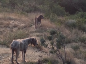 Seamus and Maebh in the fynbos