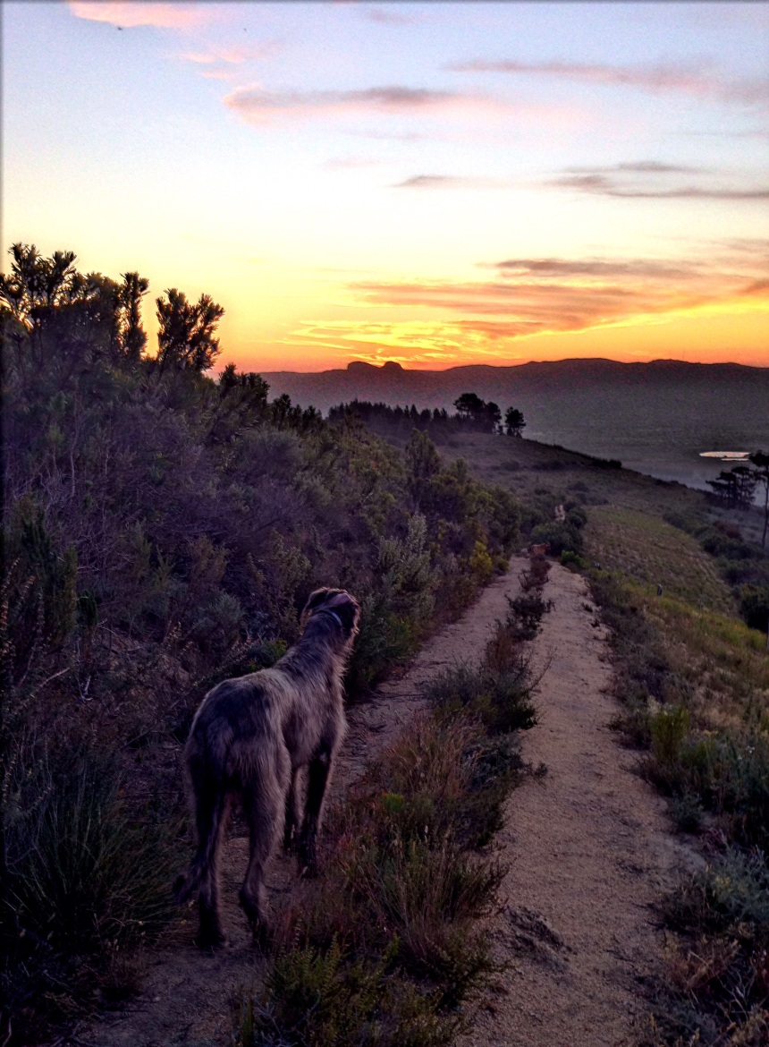 Maebh watches the sun setting over Paarl Rock