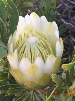 Creamy white flowers