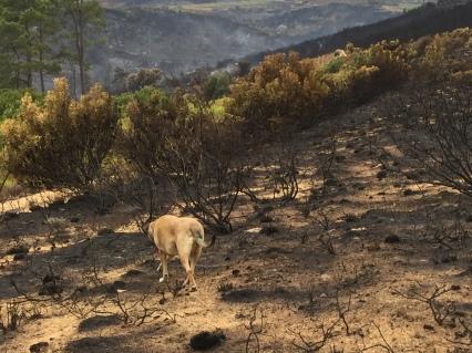 Jemima Chew in the burned lands
