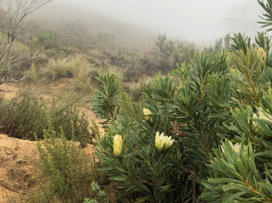 A larger shrub that survived the fires gleams in the misty light